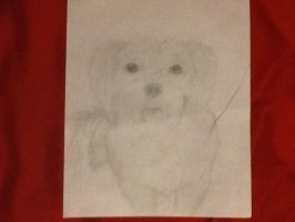 My dog Sophie by jess-the-red-head