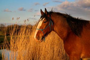 Horse at sunset by nectar666