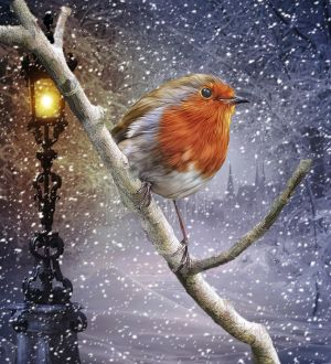 Robin on a branch by ditney