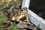 Hello froggy by MicWits101