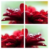 Hydrophobic effect III by Ymntle-Aleoni