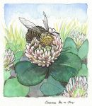 Musical Bees - Concertina Bee on Clover by phodyr