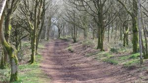 Clent Path by Figwig