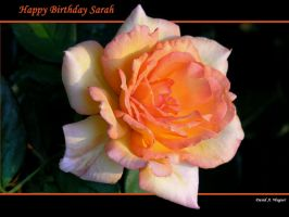 Happy Birthday Sarah by David-A-Wagner