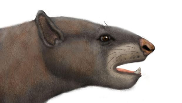Trigonostylops reconstruction by Zimices