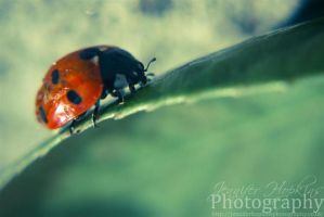 The Ladybird by ScENeYmE