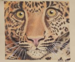 Eyes of the Jaguar by Color-Droplet