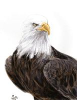 Eagle (Gift) by Yellyy