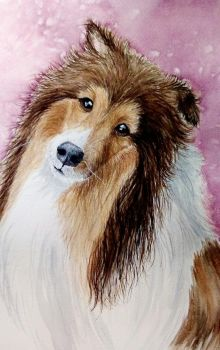 Sweet Sheltie in Watercolor by tiletable