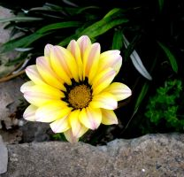 Flower in garden.. by MASYON