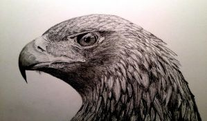 Golden Eagle Finished by richard666uk
