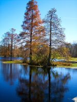 Beauty of the Swamp by Digipics60