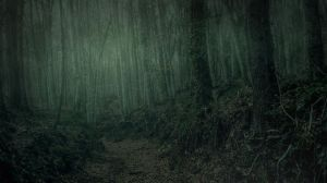 Dark Forest by Brizzolatto55