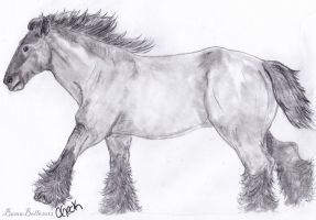Gallop by BamaBelle2012