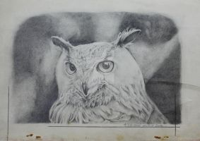 Owl. by RongLee2