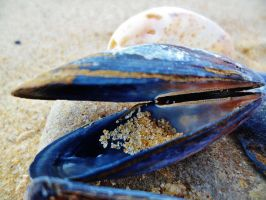 Sea Shell on the Sea Shore by Emily18495