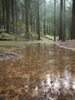Rainy Forest BG by Dragoroth-stock