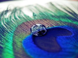 Droplet on feather by Pamba