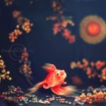 FISH by Orwald