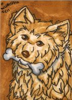 Basque ACEO by WildGriffin