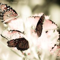 enchanted wings by teresa-lynn