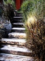 Reeds and stairs by iram