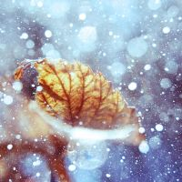 .: snoww :. by all17