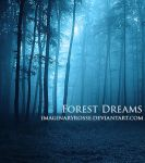 Forest Dreams by ImaginaryRosse