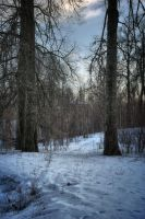 Winters Pale by xrust