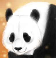 Panda by Searii