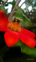 Bee..... by gintautegitte69