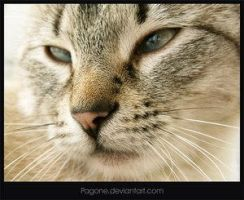Cool Cat by pagone by cat-club-cat
