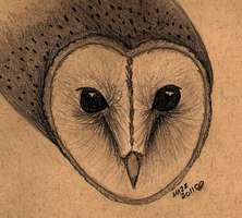 Barn Owl Face by TornFeathers