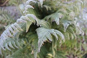 Fern in the freezer by frits10a