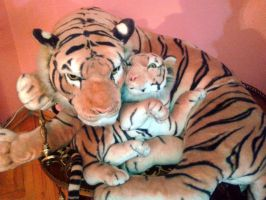 tiger n the little one by barobei