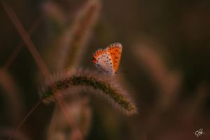 Butterfly one by cheoriginal