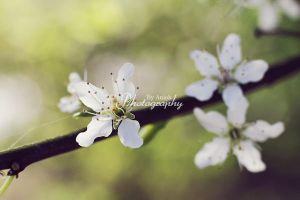 Blossoms. by AniekPhotography