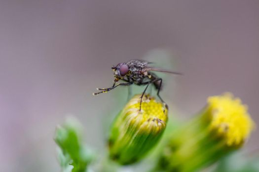 Fly On A Flower ll by RyanHousing