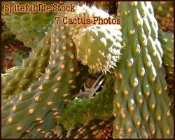 Cactus Pack by Spiteful-Pie-Stock