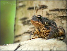 Mr. Toad by Sarah--Lynne