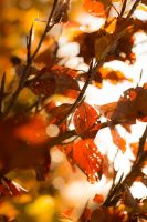 Autumn Leaves by Fritz42