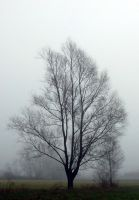 Three in the fog by mateuszskibicki1