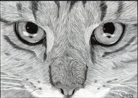 Cats Eyes Ballpoint by Cindy-R