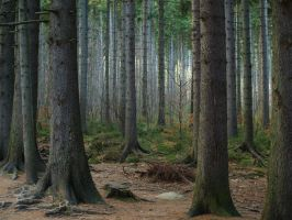 Frightening Forest 10714230 by StockProject1