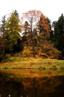 Colors of this autumn by Meernebel