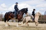 Endurance Riding XII by Colourize