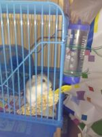 My 4 hamster Leonor by Nenetchy