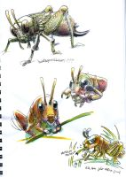 Grasshoppers by Sicko-Sis