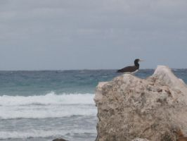 Bird And Sea by NothingLessThanEpic