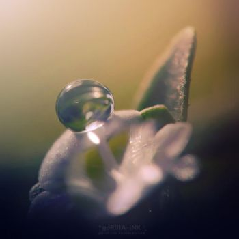 An Easter Dew Drop by goRillA-iNK